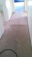 Half way done to show what a difference J2 Cleaning Las Vegas deep steam carpet cleaning makes